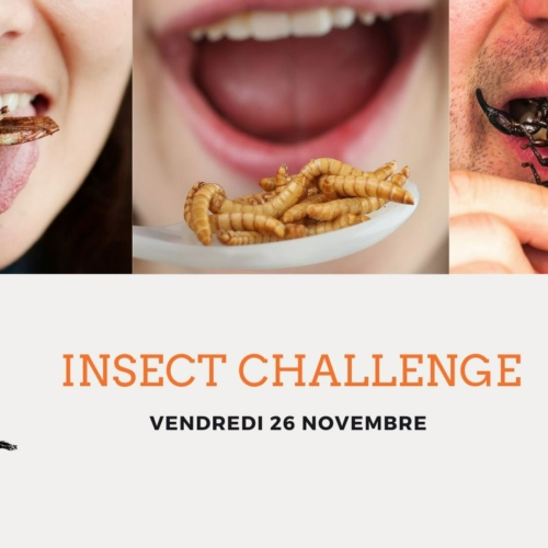 Insect Challenge- V&B Sud
